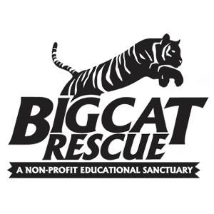 BigCatRescue